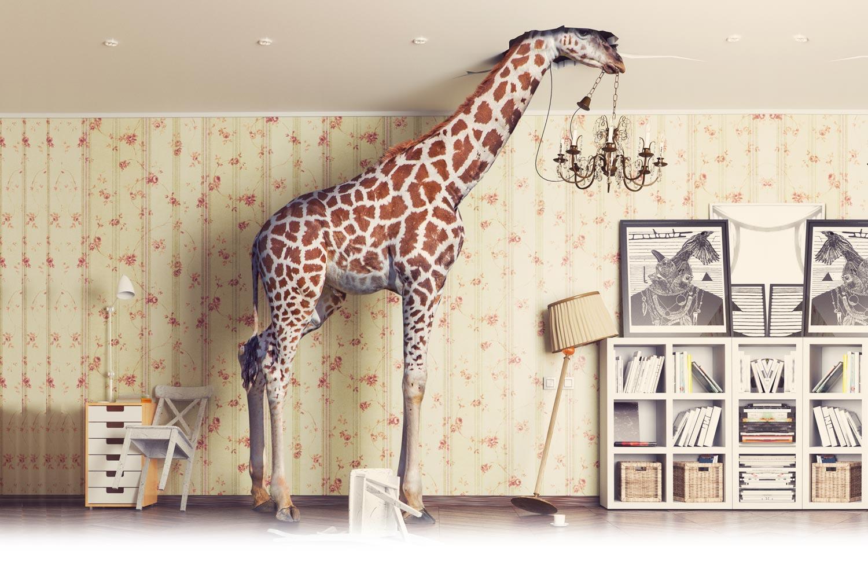 Giraffe in woning