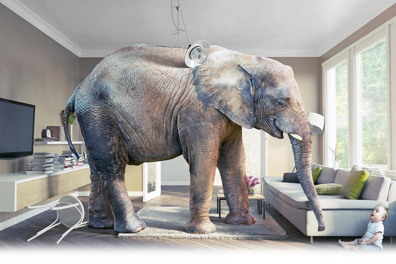 Interieur olifant Jura