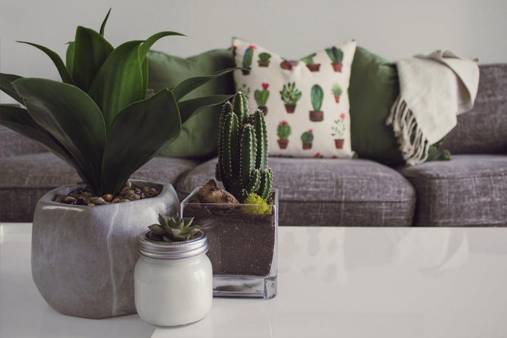 Echte planten helpen bij het zuiveren van de lucht binnenshuis.