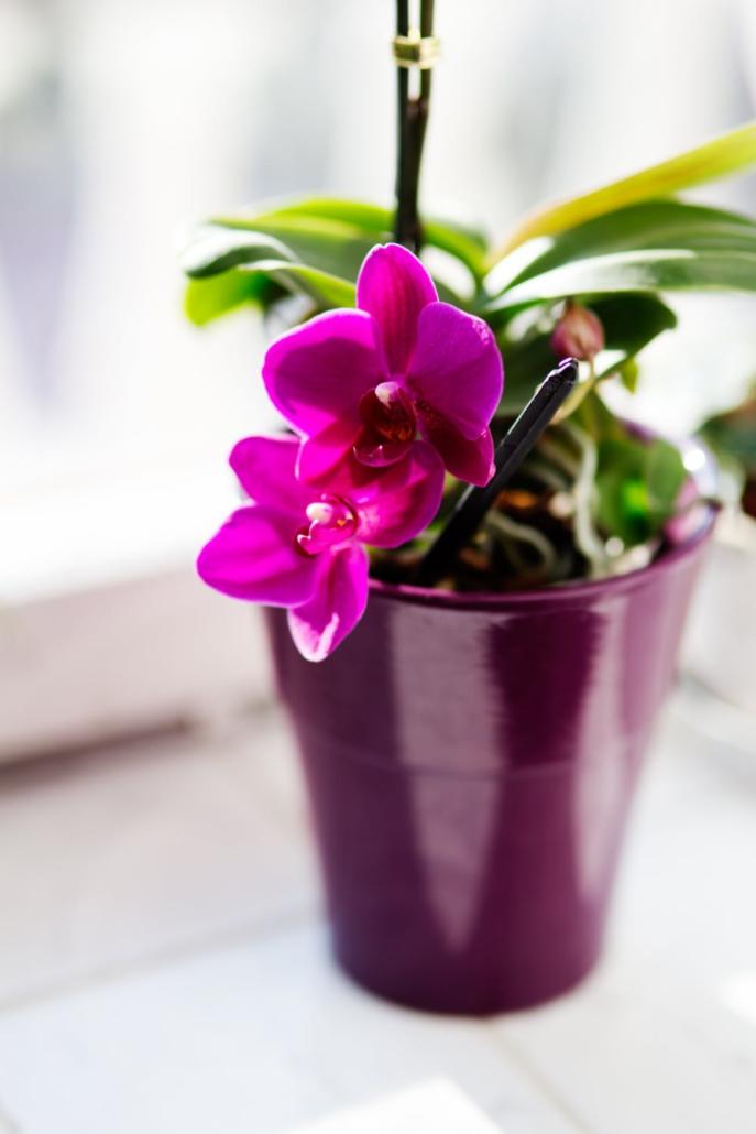 Orchideeën zijn mooie statige bloemen die weinig onderhoud nodig hebben.